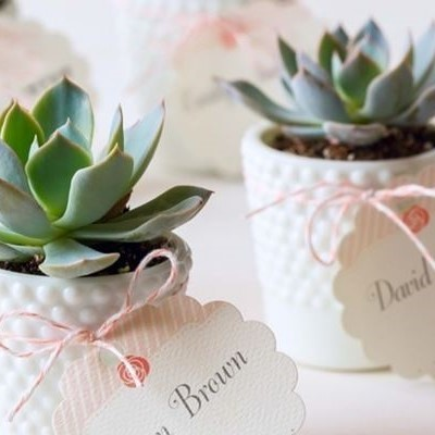 Small succulent plant in a white ceramic pot