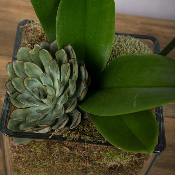 A green succulent inside in moss with orchid leaves at the side